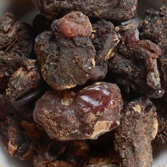Murungai Pisin / Drumstick Tree Resin / Moringa oleifera/ முருங்கை பிசின்