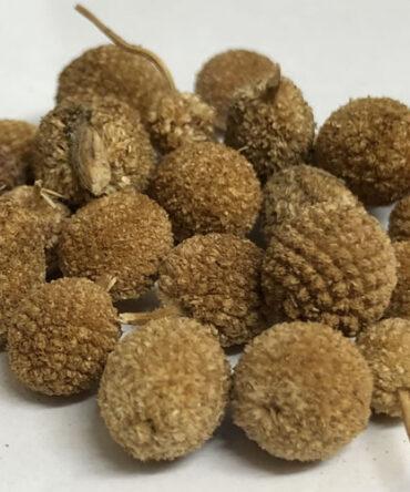 Kottai karanthai /Dried Indian sphaeranthus / Sphaeranthus indicus / கொட்டைக்கரந்தை