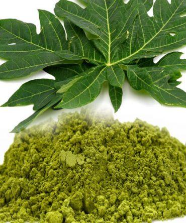 Pappali Ilai (Powder) / Papaya Leaf Powder / பப்பாளி