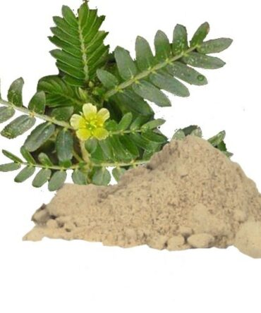 Nerinji / Caltrop / Tackweed / Bindii / Puncture Plant Powder / நெறிஞ்சி பொடி