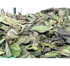 Manjanathi Leaves / Dried Nuna leaves / நுணா இலை / Nuna Leaves