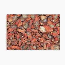 Nature Bedmen kilangu / Red Sage Root / Lal Bahaman / பெட்மென் கிழங்கு