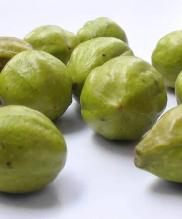 Yellow Myrobalan Powder / Kadukai Thodu Podi / கடுக்காய்தோடு பொடி