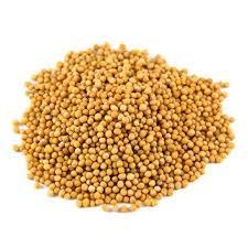 Ven Kadugu / Yellow Mustard seeds (Raw) / வெண்கடுகு