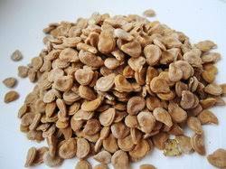 Umaththai vithai (Raw) / Dried Datura seeds  / ஊமத்தை விதை